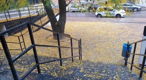 En la UID. de Ciudad Lineal, durante estos últimos días, se han acumulado gran cantidad de hojas en la entrada, las escaleras y la rampa de acceso a dicha Unidad, conllevando un gran riesgo de resbalones para los agentes y ciudadanos que transitaban por di